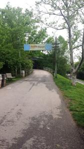 gorilla hill louisville zoo