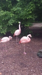 louisville zoo flamingos