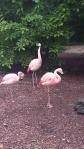 louisville zoo flamingos