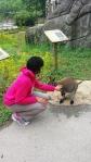 louisville zoo kangaroo