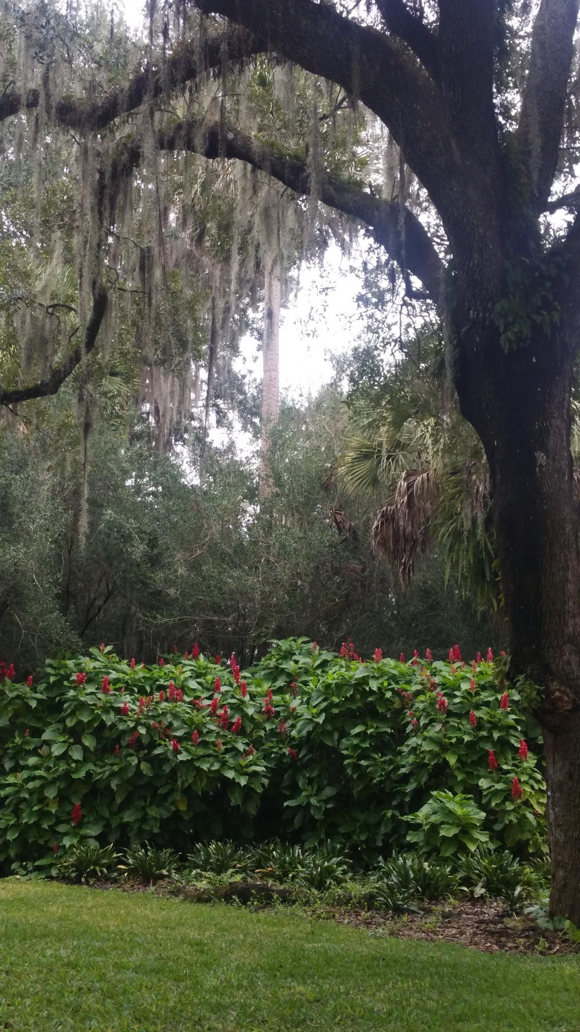 bok tower garden trees