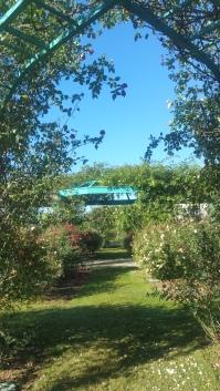 ruths-rose-garden-florida-southern-college-campus