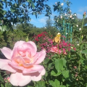 Ruth's Rose Garden Florida Southern College