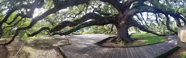 Treaty Oak Jax