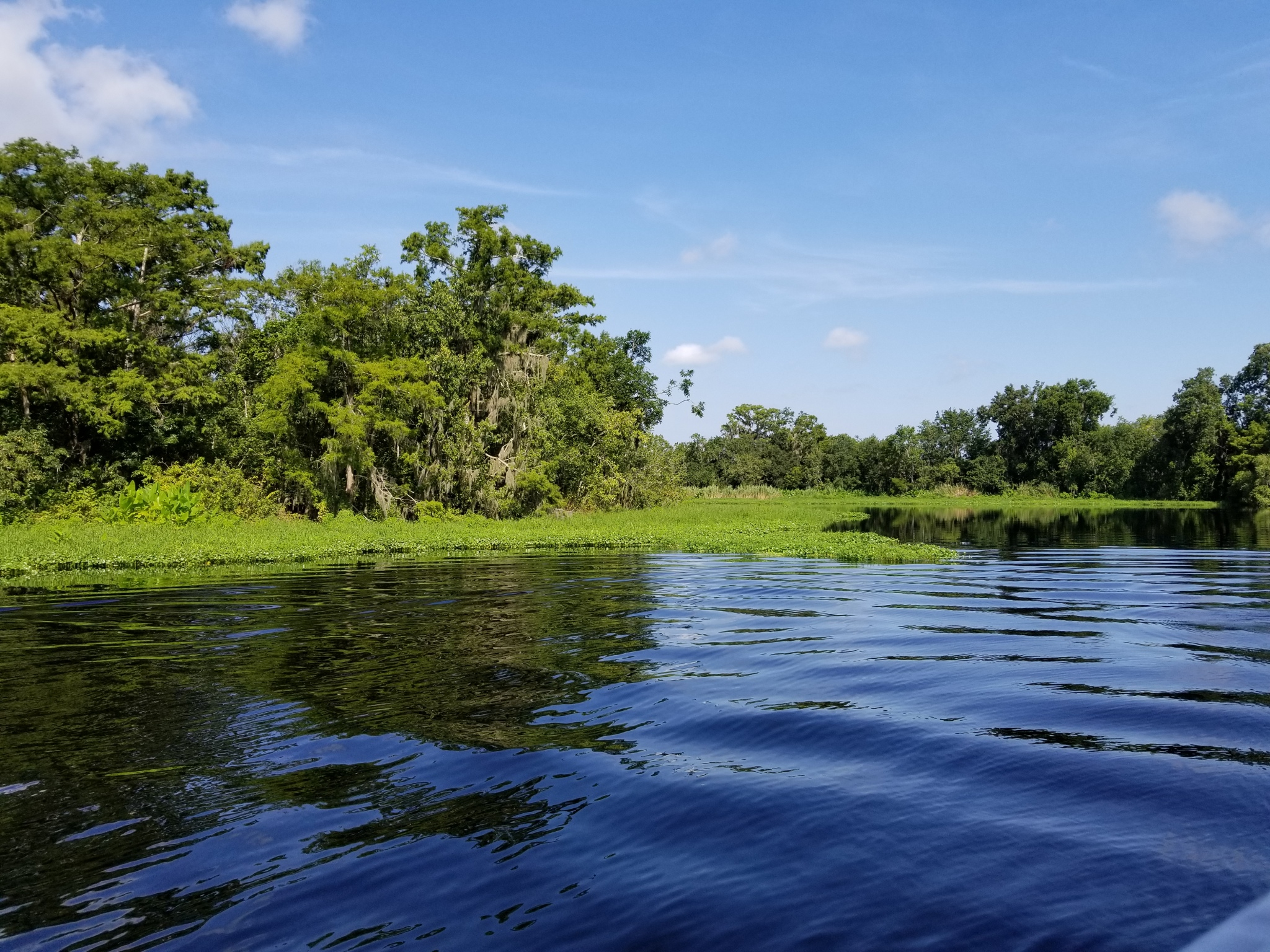 St Johns River Cruise