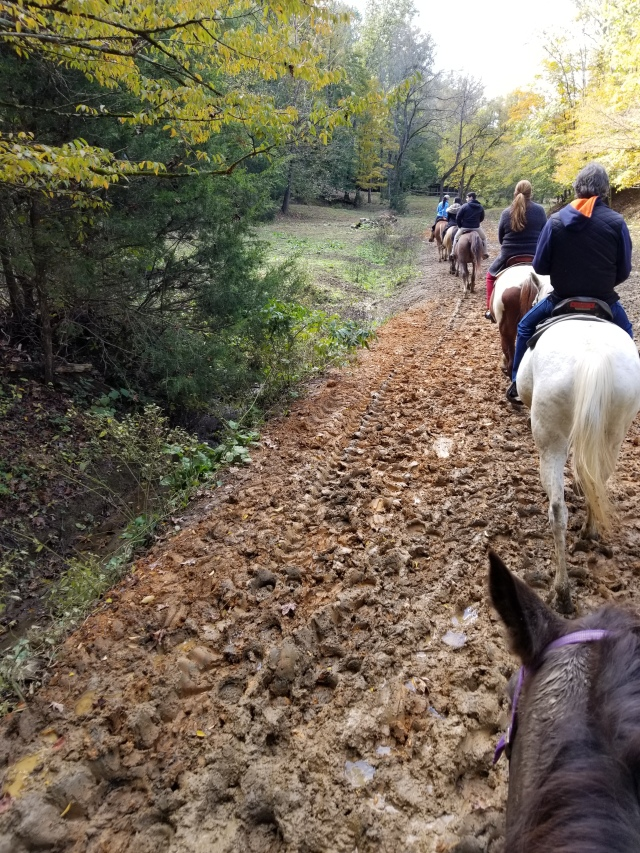 Horseback Riding Five Oaks Stables