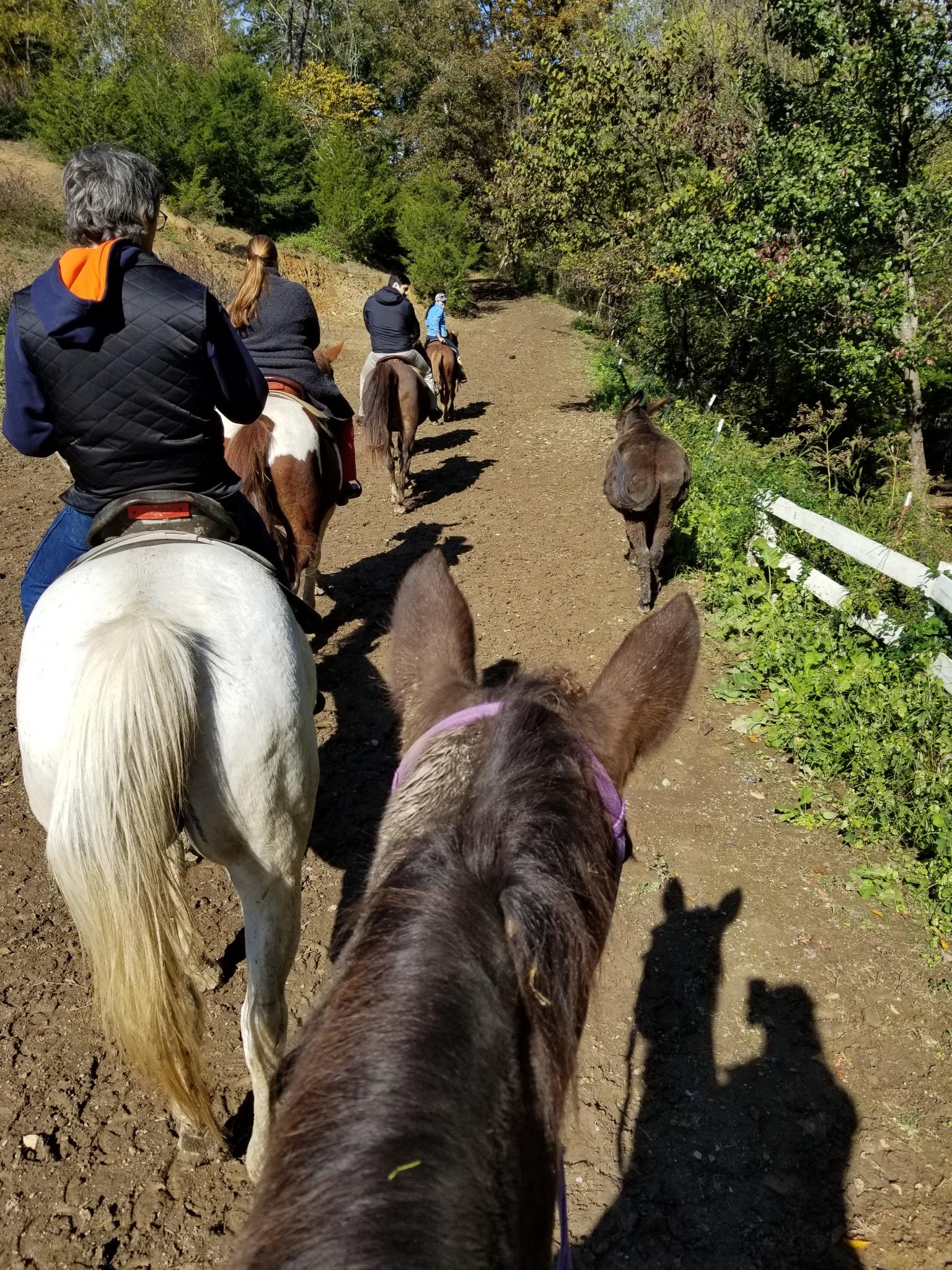 Horseback riding Gatlinburg